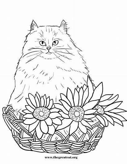Coloring Cat Pages Persian Cats Flowers Flower