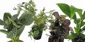 Acheter Terrarium Plante : terrarium plante lumiere ~ Teatrodelosmanantiales.com Idées de Décoration