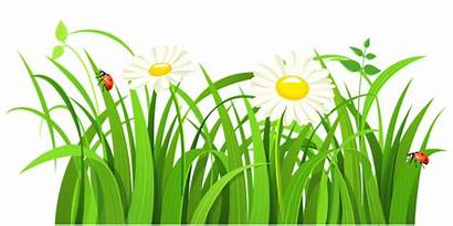 Clipart Gras Patch Flower Clipground