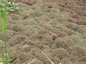 Antediluvian Salad: Azolla - the Fern that Took Over the ...