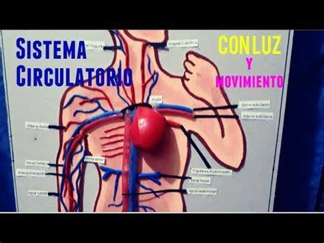 maqueta sistema aparato circulatorio con luz y movimiento