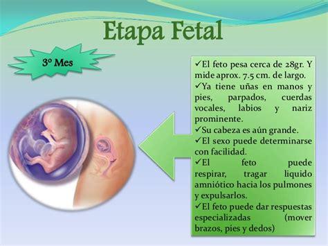 psicolog 236 a desarrollo etapa prenatal