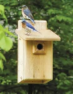 Eastern Bluebird Bird House Plans