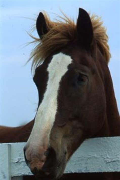 horse horses hypoallergenic hock blaze injections owner equusmagazine