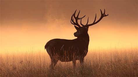 Deer Hunting Desktop Wallpaper Wallpaper Deer Silhouette Hd Animals 6191