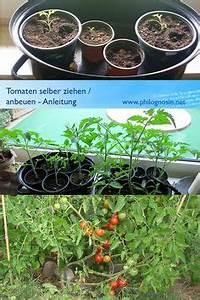 Tomaten Selber Anbauen : tomatendach regenschutz f r tomaten bauen tomaten tomatenpflanzen und berdachungen ~ Orissabook.com Haus und Dekorationen