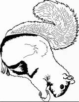Squirrel Coloring Pages Print Coloring2print sketch template
