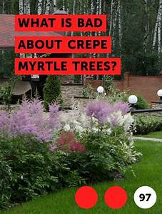 What Is Bad About Crepe Myrtle Trees