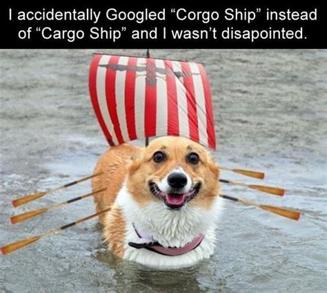 Funny Corgi Memes - best 25 corgi meme ideas on pinterest turtle kibble image dog comics and corgi personality
