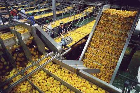 food processing conveyor industrial food processing