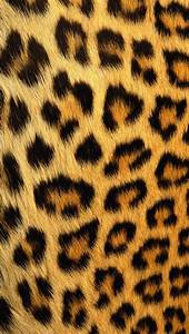 79 best images about Animal print ️ on Pinterest