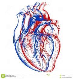 3D Human Heart Drawing