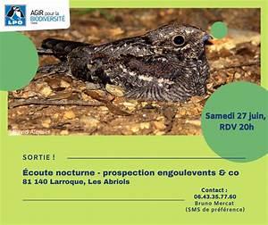 Ecoute Nocturne - Prospection Engoulevents  U0026 Co