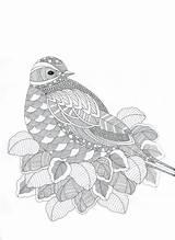 Coloring Adult Adults Zentangle Bird Birds Coloriage Animaux Zen Mandala Abstract Dessin Oiseaux Doodle Printable Vogel Books Paisley Erwachsene Colouring sketch template