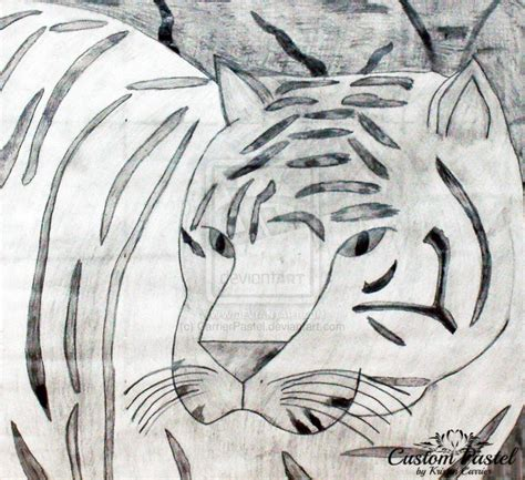 images  tigers drawing  painting tigers