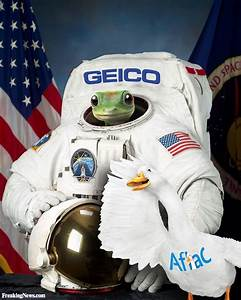 Animals in Space Pictures - Freaking News