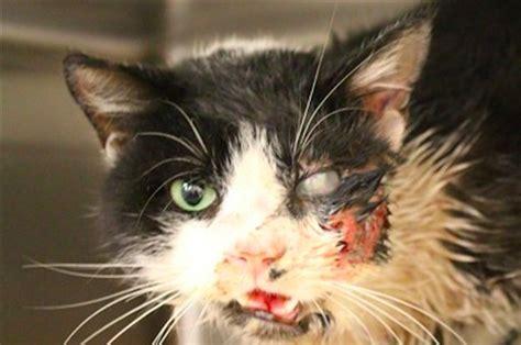 zombie cat dead came tumba did vuelve gato casa he leanoticias