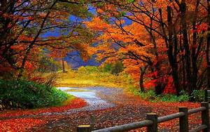 Trail, In, Autumn, Forest