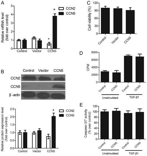 ccn overexpression inhibits profibrotic phenotypes