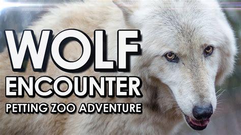 Wolf Encounter Wolf Encounter 2013 Youtube