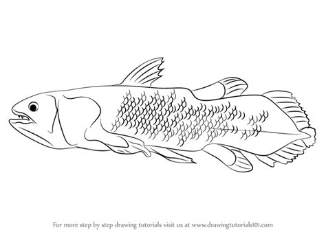 step  step   draw  coelacanth drawingtutorialscom