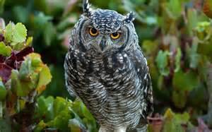 Cute Owl Desktop
