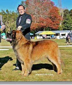 Ch Skyewood Beautiful Black Jak Leonz - Owned by Francisca ...