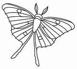 Moth Luna Coloring Strijkkralen Fruit Menagerie Miniature Groente Kralenplank Designs Them Designlooter Transfer Collage Paper Overlap Insect Delicately Wonders Drawn sketch template