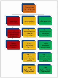 Cursus Diagramme  U2013 Centre De M U00e9decine Chinoise  U2013 Ecole