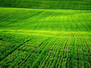 Grass Field Wallpapers ~ HD Wallpapers | Funny Videos ...