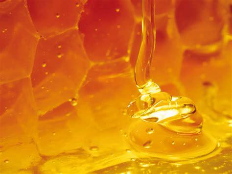 plant breeding program  grow australian manuka honey