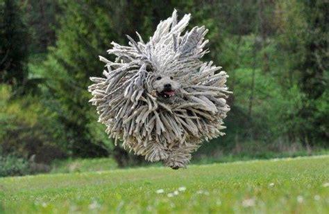 funny dog   beautiful  picturescraftscom