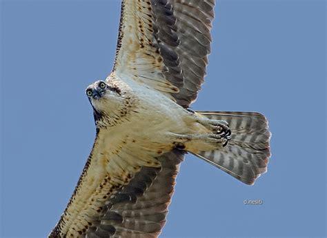 outside my window 187 birds of prey