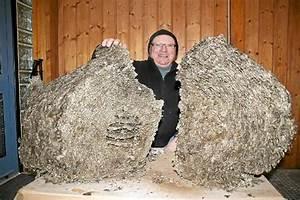 Wespen Im Haus : wespennest im rolladenkasten wespennest im rolladenkasten ~ Lizthompson.info Haus und Dekorationen