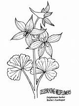 Coloring Delphinium Larkspur Flower Pages Drawing Flowers Printable Draw Google Poppy Illustration Drawings 57kb 783px Adults Doodle Sketches sketch template