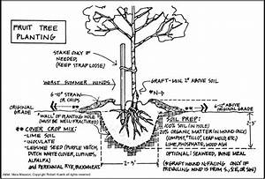 Fruit And Nut Tree Planting Diagram  Trees Of Antiquity