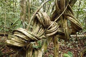 Rainforest Undergrowth - Stock Image C001  9703