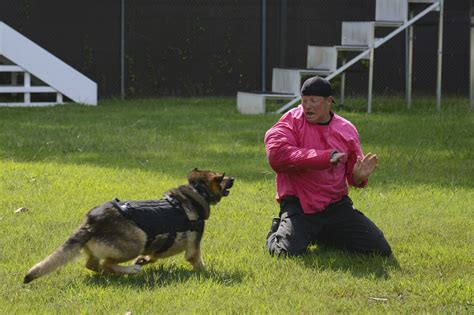 Military Working Dogs Bite Into Joint Training > Joint