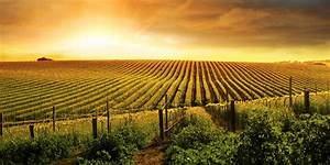 Vineyards, Winery & Wineries For Sale - United Country