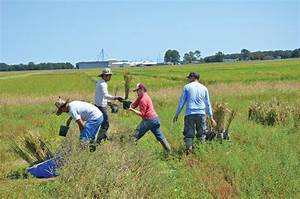 3 goals outlined for 2013 in hybrid rice work - LSU AgCenter