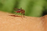 How to Avoid Mosquitoes and Ticks This Summer   Mass.Gov Blog