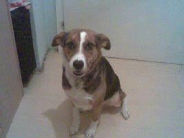 Ich Suche Einen Großen Hund : ich suche meinen hund in wien von privat hunde ~ Jslefanu.com Haus und Dekorationen
