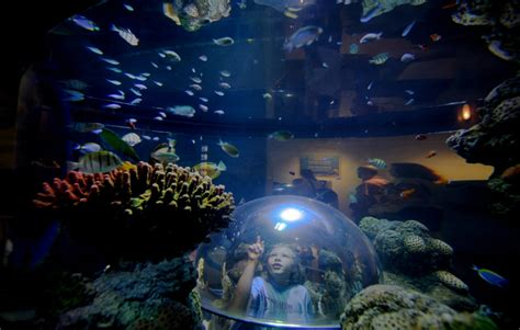 sea aquarium california legoland california and sea aquarium travel tips