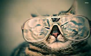 cool cats sunglasses cool cat with sunglasses wallpaper