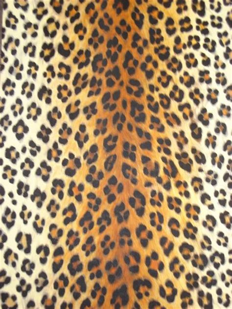 Jungle Safari Leopard Animal Print Wallpaper Border - cheetah print wallpaper for walls wallpapersafari