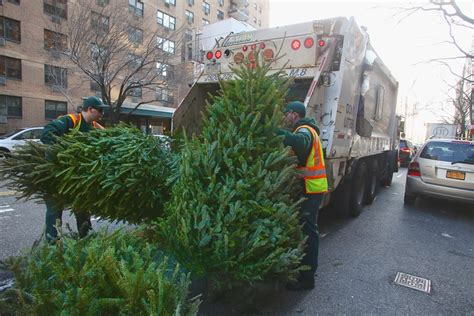 boroondara council collection for christmas trees dsny the city of new york department of sanitation