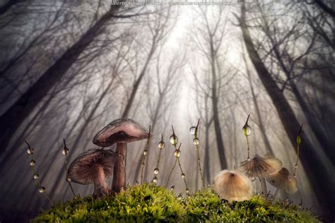 500px Blog » The Passionate Photographer Community » Top