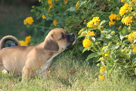 Dog Repellents How To Keep Dogs Away From Yards