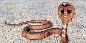 Wie gefährlich ist eigentlich ein Schlangenbiss?
