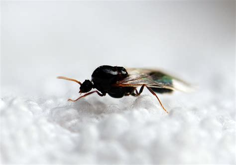 do ants wings what does a queen ant look like wild about ants